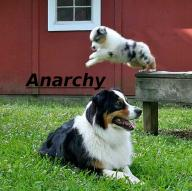 anarchy barns dogs farms jump // 564x563 // 576.8KB