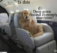 animal,golden,retriever,extremely,anarchism // 531x493 // 355.3KB